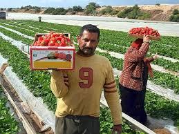 migranti al lavoro campi