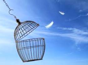 valori di libertà in gabbia