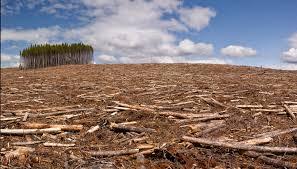 distruzione habitat
