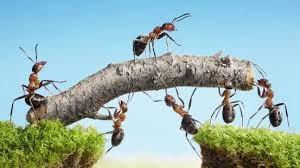 interazione formiche