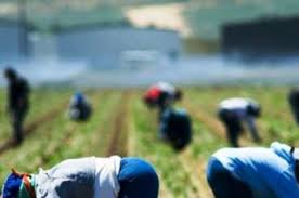lavoro nero campi